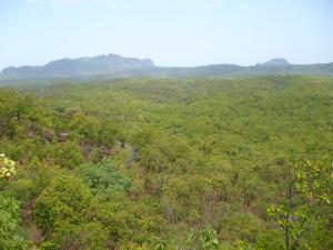 सतपुड़ा के घने जंगल